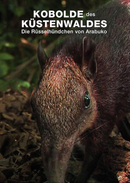 Rainforest Pixies: The Mysterious Rhynchocyon Shrew of Arabuko